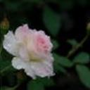 Flower4_thumb128