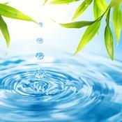 Waterbamboo_thumb175