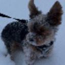 Snowbruzo-1-1-1_thumb128