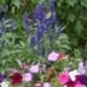 More_flowers_2_thumb128