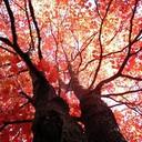 Tree_thumb128