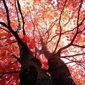 Tree_thumb175