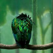 Greenbird_ipad_thumb175