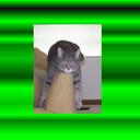 Iona406_logo_green_thumb128