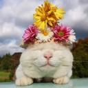 Whitecat_thumb128