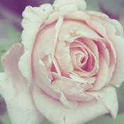 Prrty_flower_thumb175