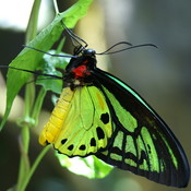 Butterfly_thumb175