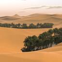Lone_palm_sahara_desert_thumb128