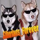 Siberians_forever_thumb128