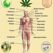 Herbal-benefits-of-medical-marijuana-chart-e1439726690327_thumb175